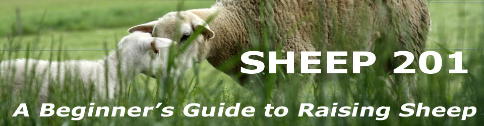Sheep 201: Enterprise budgeting