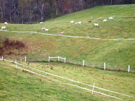 Poly Wire Fencing | Sheep 201 Fencing
