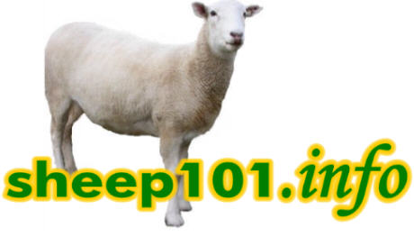 sheep101 logo