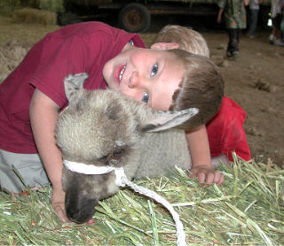 Boy with lamb