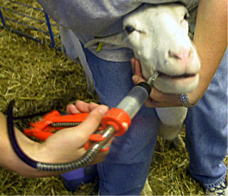 Deworming medicine for sheep
